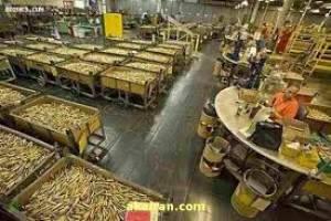 میوه ها کانتینری به داخل کشور قاچاق میشوند