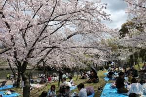 ساکورا: بهشت ژاپنی