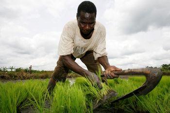 آفریقا؛ بازار بِکری برای ایران