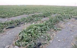درخواست ۶۰ میلیارد تومان برای جبران خسارت کشاورزی مناطق زلزله زده کرمانشاه