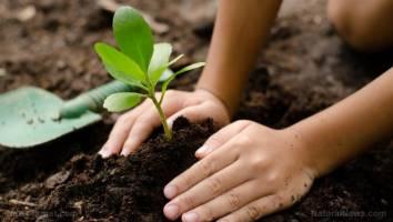 طرح درخت کاری دانشگاه کردستان با همکاری دانشجویان و دوستداران محیط زیست