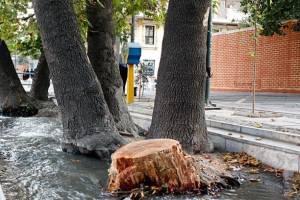 آیا درختان شهر تهران دچار سرطان قارچ رنگی شده اند؟