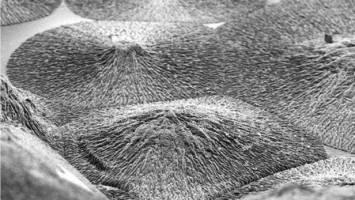 کشف روش تولید مینای دندان!