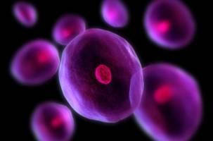 بررسی نقش ویتامین «C» بر تمایز سلول های بنیادی عصبی