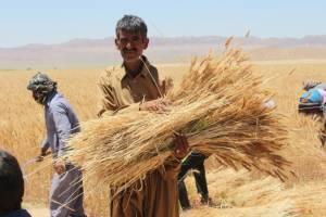 بررسی وضعیت کشاورزی کشور در 6 سند توسعه پس از انقلاب