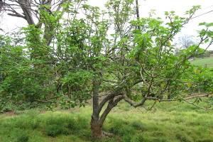 نابودی جان سختترین پروتئین عامل سرطان با ریشه یک گیاه