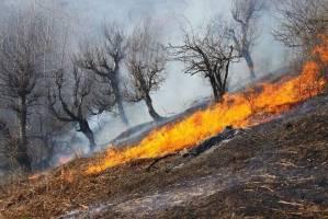خطر آتش سوزی در کمین جنگلهای بلوط زاگرس